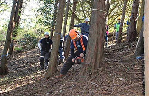 伊豆の国市で実演された間伐作業