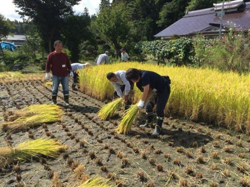 飯豊町で稲刈りを体験した参加者