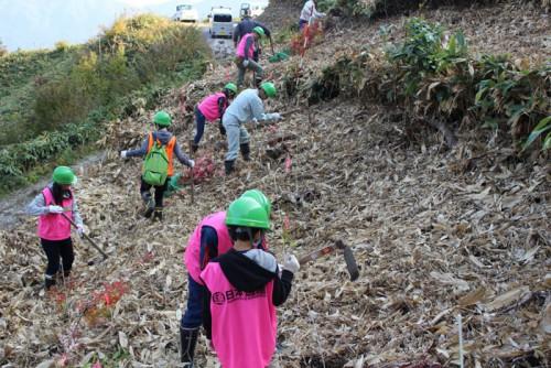 日南町で植樹活動