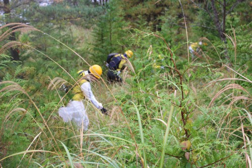 伊豆の国市で行われた下草刈り作業