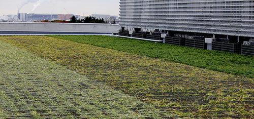 屋上の緑地