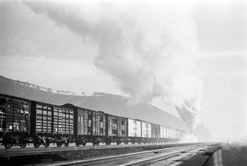 東海道本線を行く貨物列車(1954年)