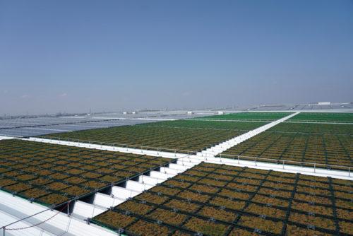 左側の銀色の部分が6370枚の太陽光パネル、全て売電、右側の茶色と緑色の部分は天井緑化の一部