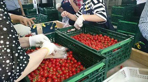 20190620nogyo2 500x278 - 農業総合研究所/佐賀県鳥栖市に農産物の集荷・物流拠点開設