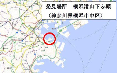 20190719yokohama1 500x313 - 東京港品川ふ頭、横浜港山下ふ頭/ヒアリ確認