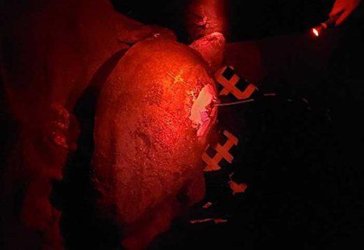 20190819nyk1 520x357 - 日本郵船/絶滅危惧種アカウミガメの生態を調査