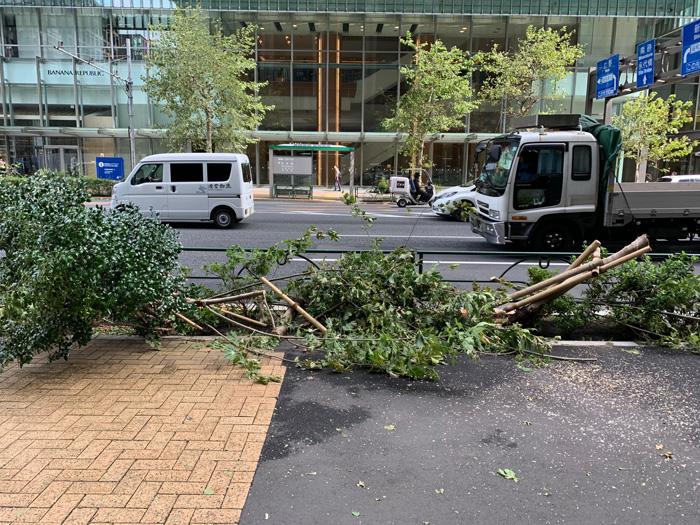 東京・日本橋付近 強風でなぎ倒された街路樹
