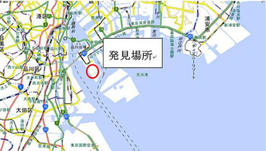 20191011ari2 520x295 - ヒアリ・アカカミアリ/東京港青海・品川ふ頭で計700匹超