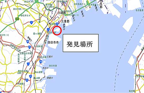 20191126hiari1 - 環境省/四日市港で初のヒアリ発見、15都道府県に拡大