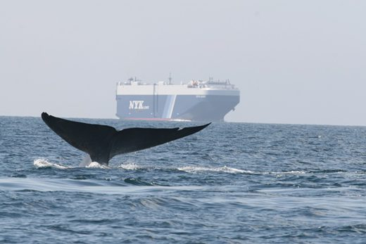 20200605nyk 520x347 - 日本郵船/北米西岸での減速プログラムで2年連続の金賞