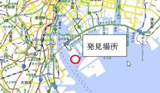 20200619kankyo1 1 520x301 - ヒアリ/東京湾で相次ぎ発見、川崎で初の確認、千葉では千匹以上