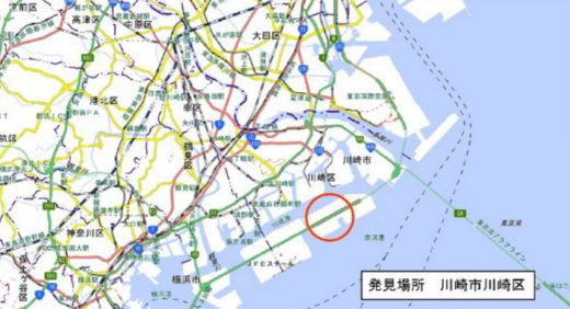 20200625hiari1 520x282 - ヒアリ/東京湾で相次ぎ発見、川崎で初の確認、千葉では千匹以上