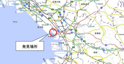 20200625hiari2 520x269 - ヒアリ/東京湾で相次ぎ発見、川崎で初の確認、千葉では千匹以上