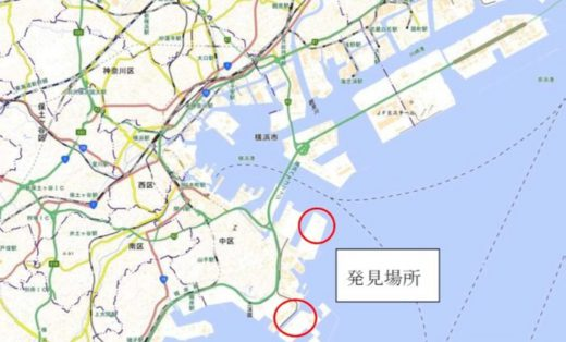 20200625hiari3 520x314 - ヒアリ/東京湾で相次ぎ発見、川崎で初の確認、千葉では千匹以上