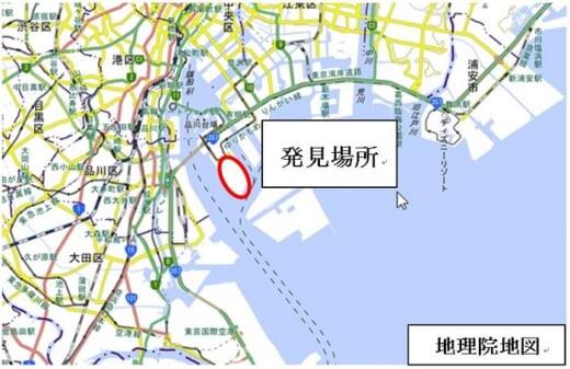 20210525hiari1 520x337 - 環境省/東京港青海ふ頭でヒアリ150匹確認